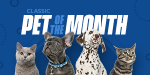 Classic Pet of the Month