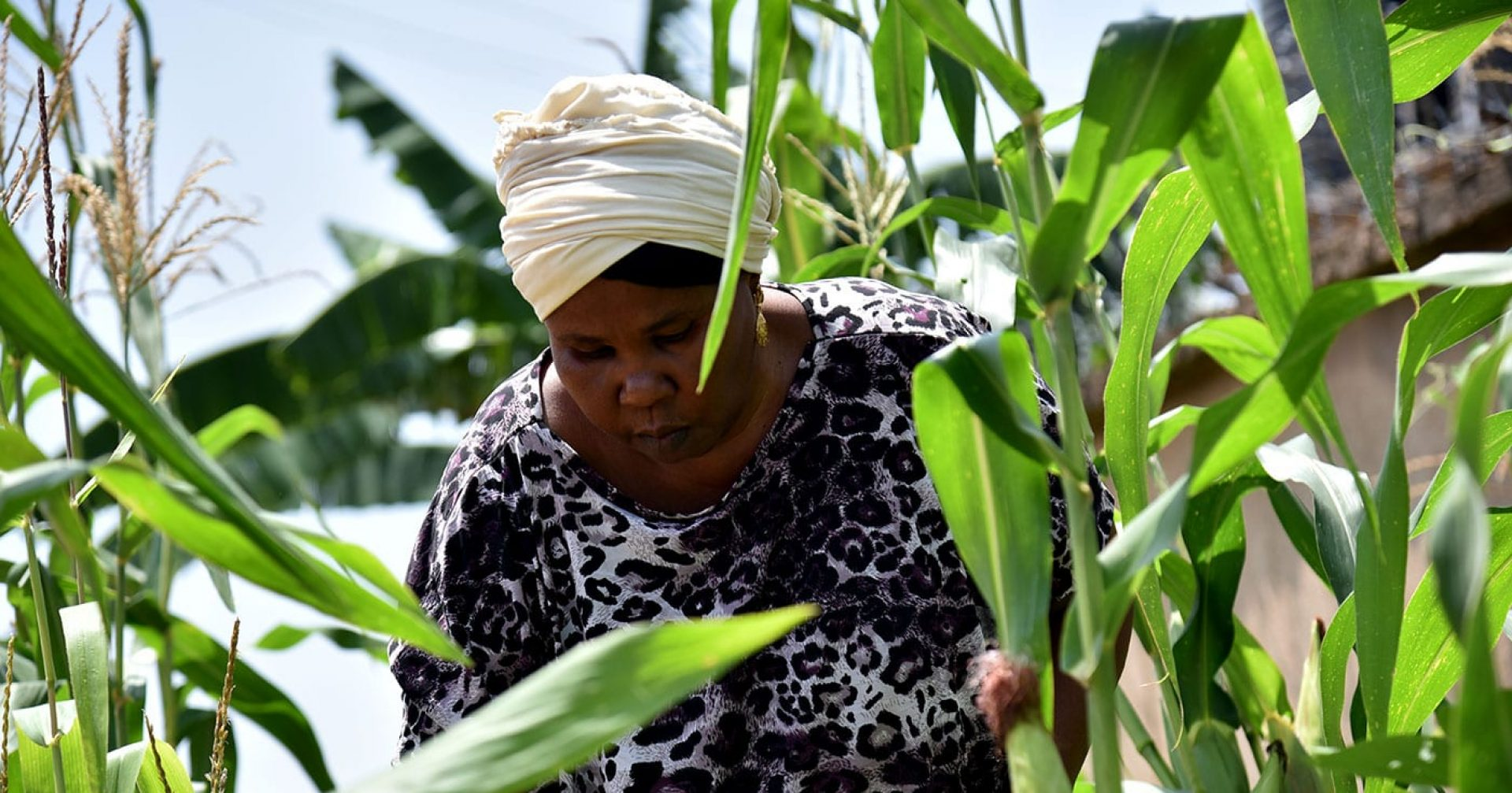 A woman standing in rows of corn