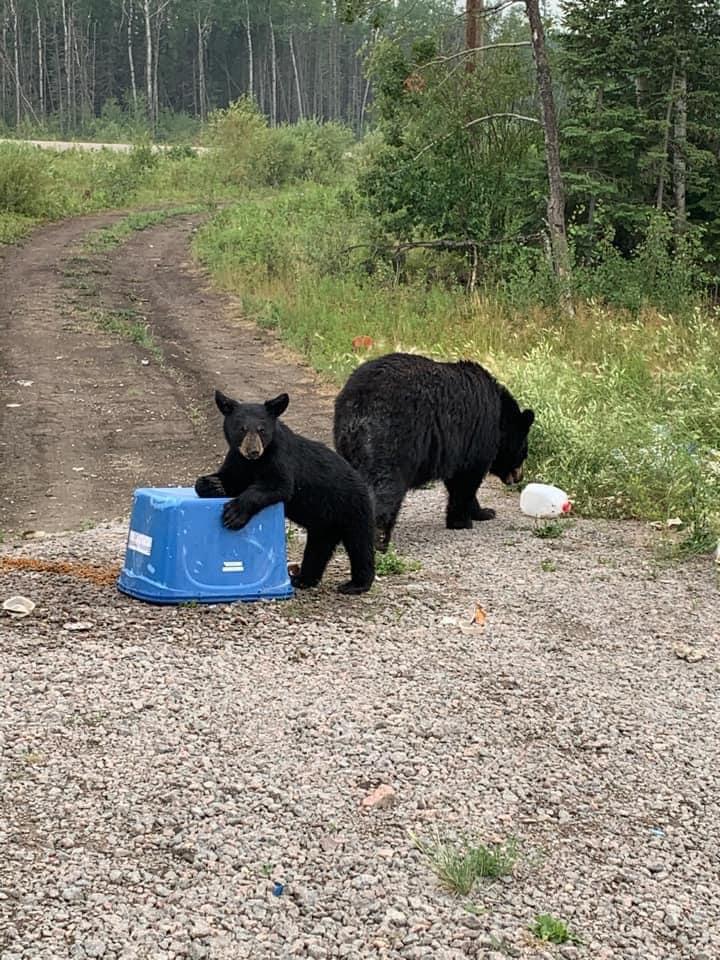 k9 bears
