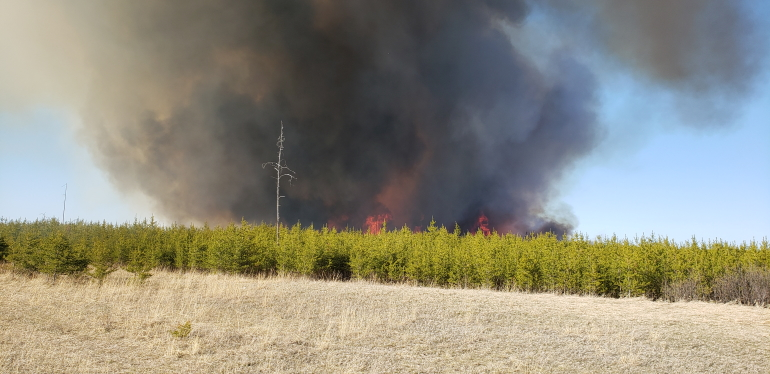 Forest fire in the Sandilands.